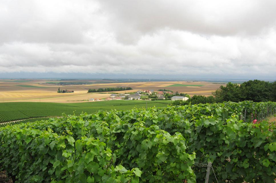 Мировые климатические изменения оказывают негативное влияние на виноделие разных регионов. Эта проблема коснулась и знаменитого французского игристого вина - шампанского.