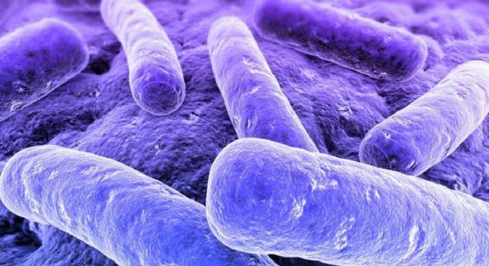 Пурпурные фототрофные бактерии (PPB)