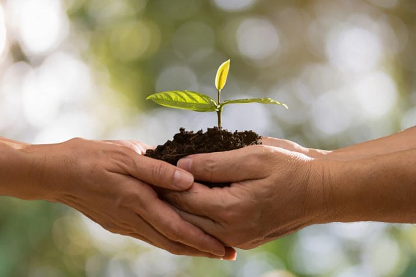 вместе посадить растение
