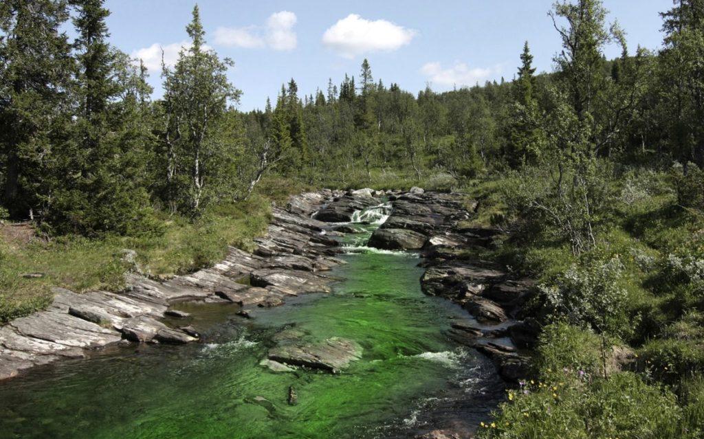Загрязнение ручьев и водоемов Европы
